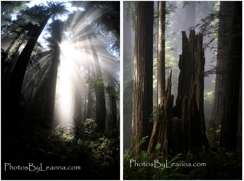 The photo on the right is a lightning struck tree. The lightning strikes the top of the tree and travels down, burning out the inside. Awesome!