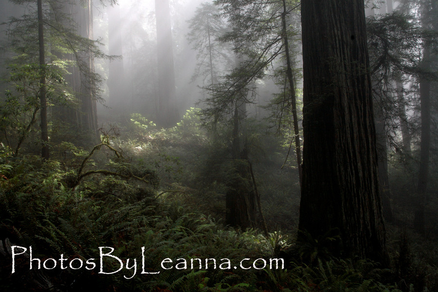 California Dreamin' (part two)