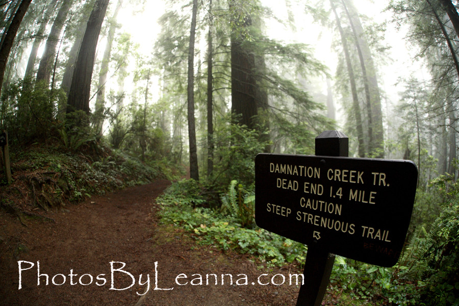 They are not kidding about the strenuous part. This sign is halfway into the trail. Until this point you are not even sure you are on the Damnation Trail!